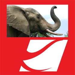 kalyan silks elephant